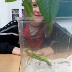 insekten_8